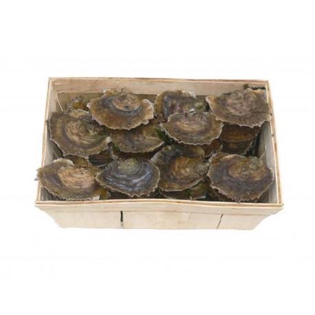 Huîtres PLATES de Belon - Bourriche de 24