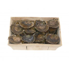 Flat Oysters from Belon - Batch of 50