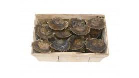 Huîtres plates de Belon - Bourriche de 50