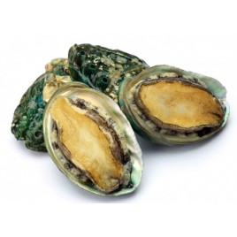 Wild Abalone - Live - 1kg