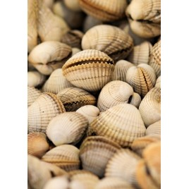 Cockles from Brittany - 500g