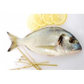 Royal sea bream - 1.2kg