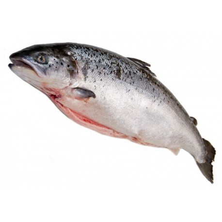 RED LABEL SCOTTSH SALMON – Whole fish 3KG