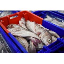 Filet d'églefin avec peau lot de 1kg