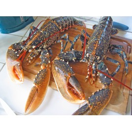 Homards breton 4/600g - Lot de 2 pieces