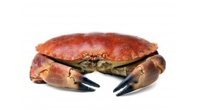 Crab - From Brittany - Cooked