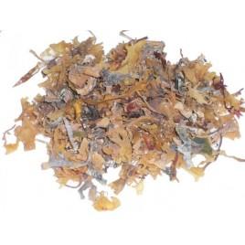 Chondrus crispus déshydraté - Les Algues Gastronomes