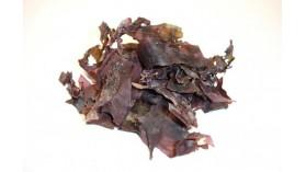 Dulse déshydratée en feuilles - BIO - Les Algues Gastronomes