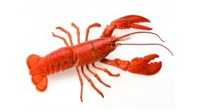 Canadian Lobster - Cooked - Sized 450g to 550g
