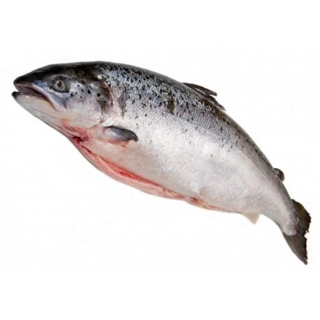 Saumon écossais label rouge - Pièce de 2.5kg