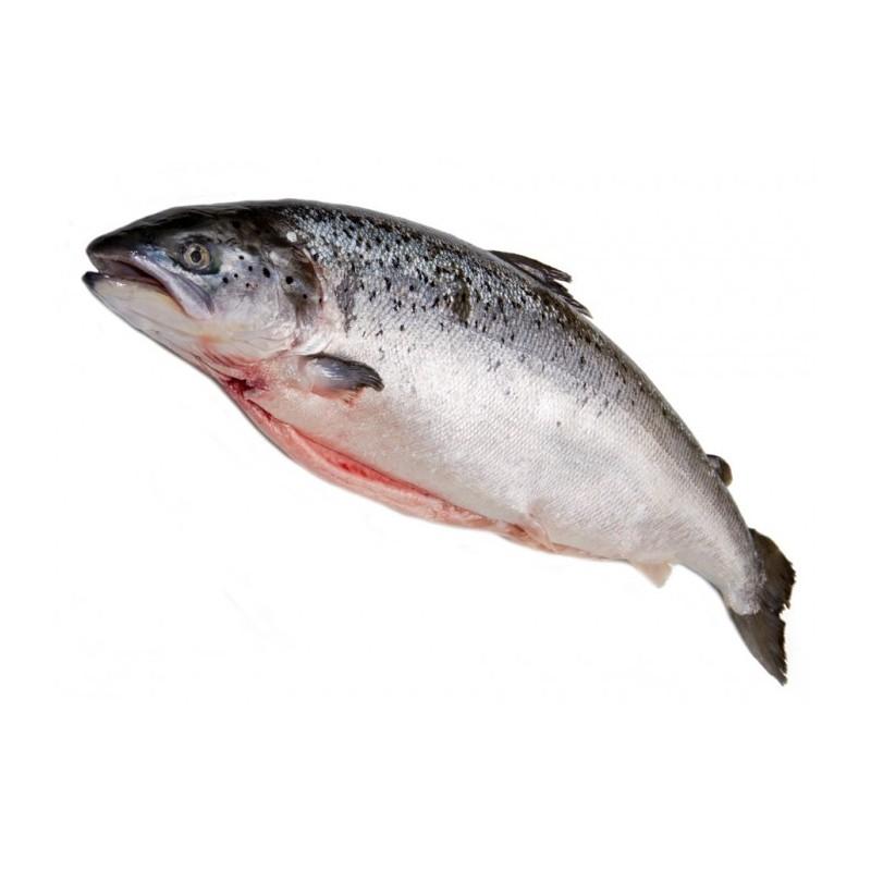 Saumon cossais label rouge achat vente de poissons for Achat poisson rouge limoges
