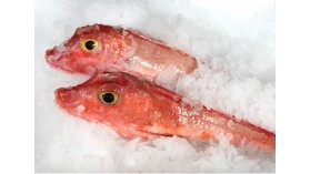 Red gurnard fillets - 400g