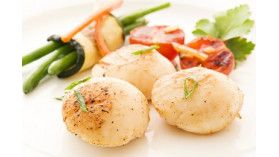 Scallops From Brittany
