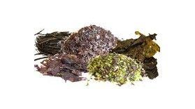 Algues déshydratées