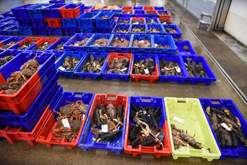crustacés criée de saint quay portrieux